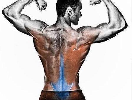 چگونه عضلات کمر را تقویت کنیم؟