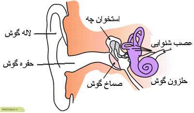 چگونه از گوشهایمان مراقبت کنیم؟