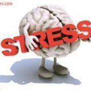 چگونه استرس میتواند باعث افزایش کارایی و تقویت عملکرد شود ؟