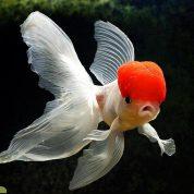 ماهی ها چگونه حرکت میکند؟