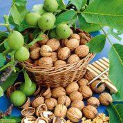 چگونه از برگ، پوست ومغز گردو برای حفظ سلامتی استفاده کنیم؟؟