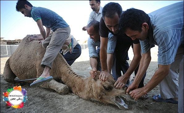 مواردی که موقع سر بریدن حیوان، رعایت آنها مستحبّ است