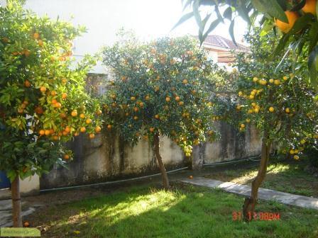 چگونه از درخت پرتقال نگهداری کنیم؟