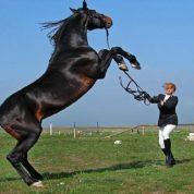 چگونه اسب را رام کنیم؟