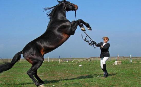 رام کردن اسب | چگونه اسب را رام کنیم؟