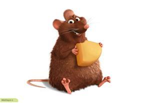چگونه موش را از خانه بیرون کنیم؟