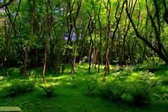 فرصت شغلی و بازارکار جنگل بان