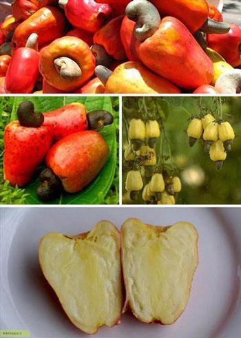 میوه کاشو