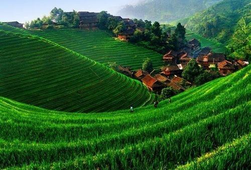 چگونه می توان به توسعه کشاورزی کمک کرد؟