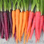 چگونه در باغچه هویج بکاریم؟