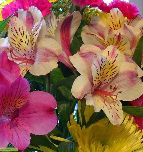 چگونه گل سوسن بکاریم؟