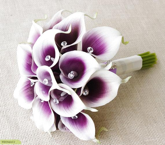 چگونه گل شیپوری پرورش دهیم؟