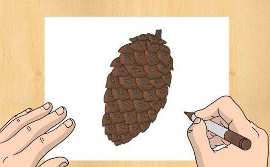 چگونه مخروط کاج رسم کنیم؟؟