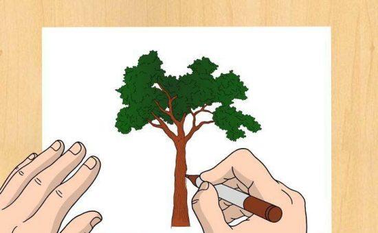 چگونه یک درخت طبیعی یا واقعی رسم کنیم؟؟
