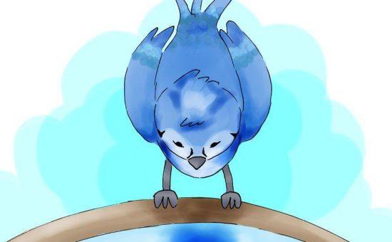 چگونه به جذب پرنده جیز آبی پی ببریم؟