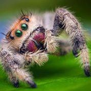 چگونه عنکبوت تار میسازد؟