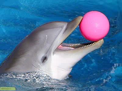 چگونه به نحوه تنفس دلفین ها پی ببریم؟