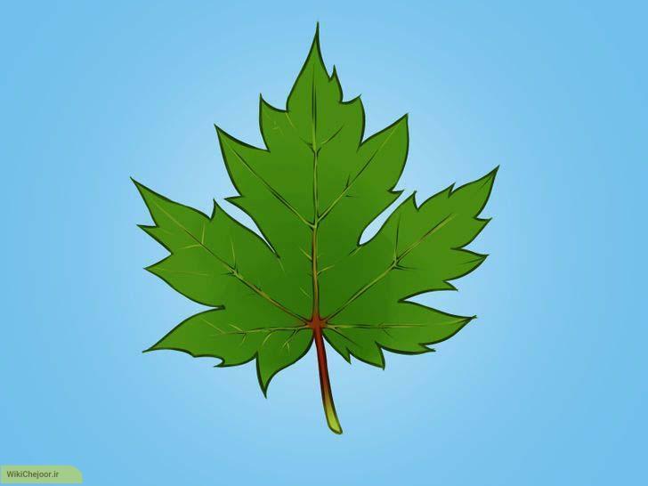 چگونه برگ افرا رسم کنیم؟؟ (نقاشی برگ)