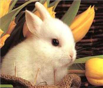 چگونه به خرگوش های نوزاد غذا دهیم؟