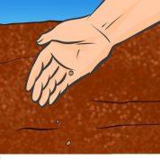 چگونه کدو قلیایی را در کرتی قفسی پرورش دهیم؟