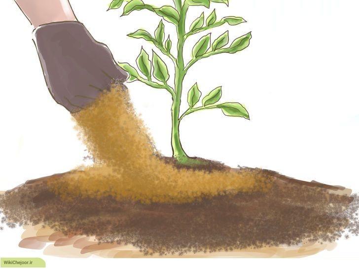 مراحل نگهداری از سبزیجات :
