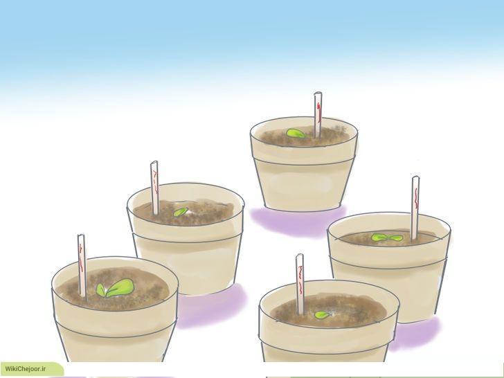 چگونه دانه های سبزیجات را در خانه رشد دهیم؟