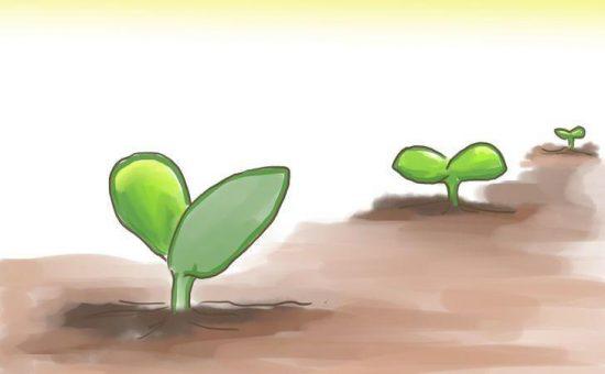 چگونه در تابستان از سبزیجات مراقبت و نگهداری کنیم؟؟