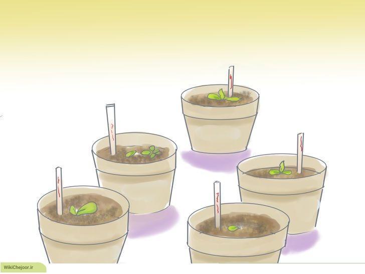 مراحل رشد دانه های سبزیجات خانگی