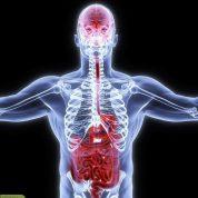چگونه میتوان با ماساژ درمانی به سیستم گوارش کمک کنیم؟