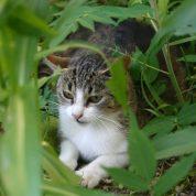 چگونه یک حیوان را به عنوان حیوان خانگی به خانه خود جذب کنیم؟