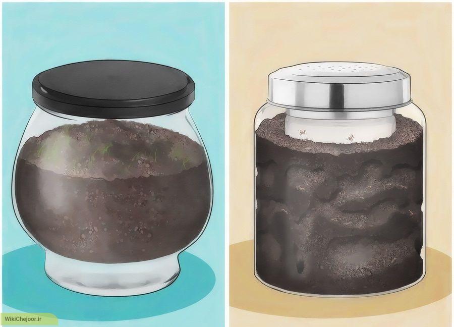 چگونه از مورچه ها مراقبت کنیم؟