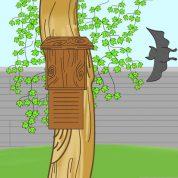 چگونه به باغ خود خفاش جذب کنیم؟