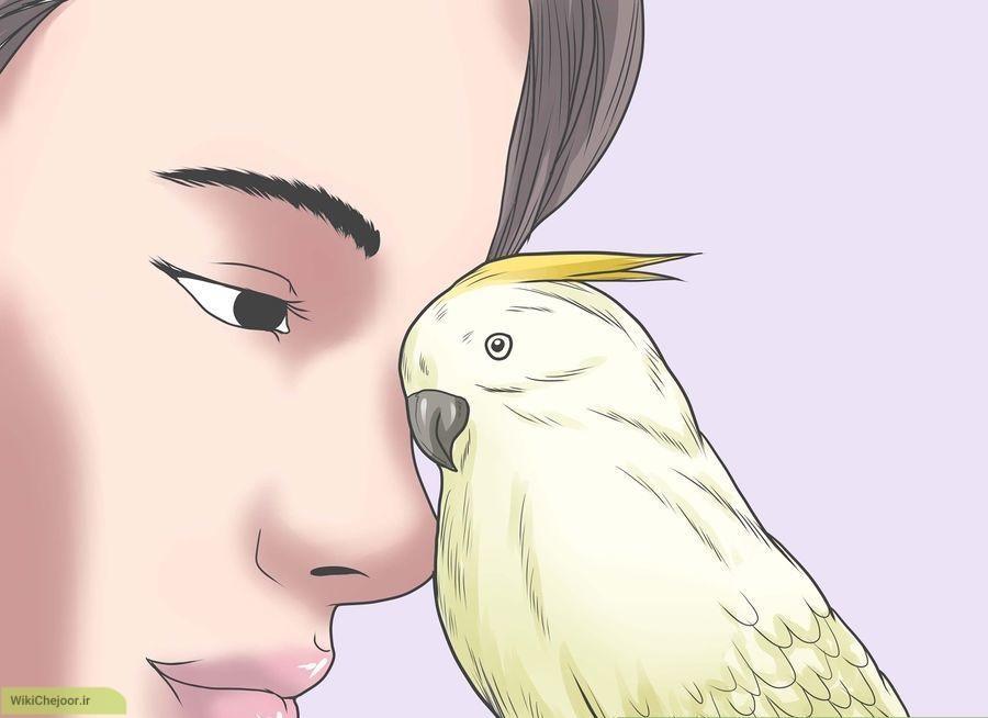 چگونه به پرندگان وحشی با دست خود غذا دهیم؟