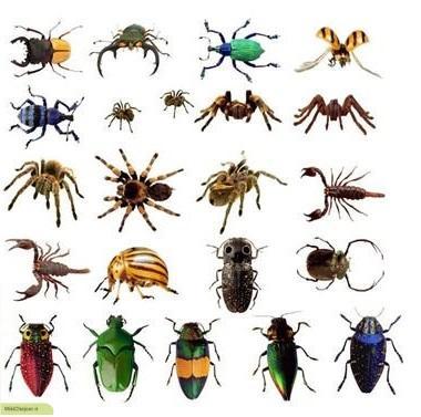 چگونه انواع حشرات را به انگلیسی بیان کنیم؟