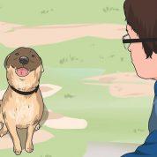 چگونه میتوانیم با حیوانات خانگی ارتباط برقرار کنیم؟