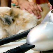 چگونه حیوان خانگی خود را با جارو برقی تمیز کنیم؟