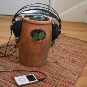 چگونه تاثیر موسیقی بر گیاهان را آزمایش کنیم؟