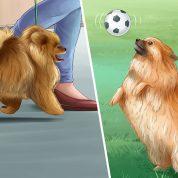 چگونه میتوانیم یک صاحب خوب برای حیوان خانگی خود باشیم؟