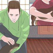 چگونه بیماری  یک سگ را بهبود دهیم؟