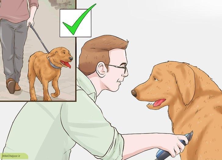 چگونه میتوانیم قشر(غشاء) سگ را تروتمیز کنیم؟