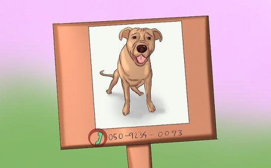 چگونه میتوانیم حیوان خانگی گمشده خود را پیدا کنیم؟