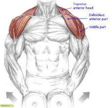 تقویت عضلات شانه