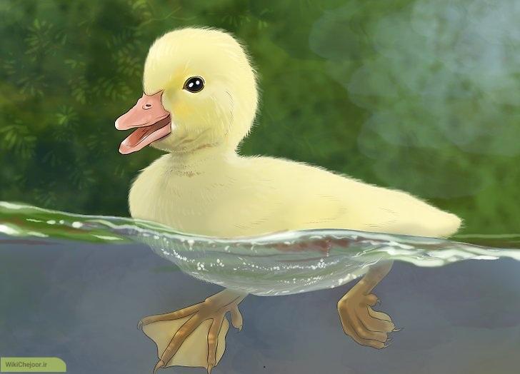 چگونه میتوانیم از یک جوجه اردک مراقبت کنیم؟
