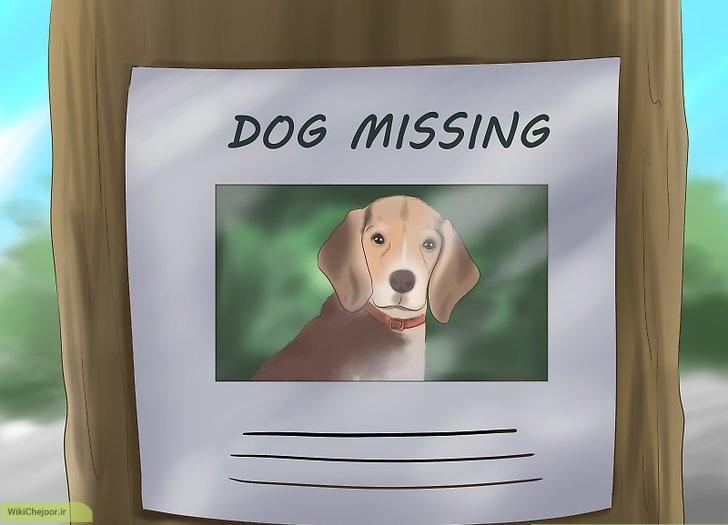 چگونه میتوانیم سگ گمشده خود را پیدا کنیم؟