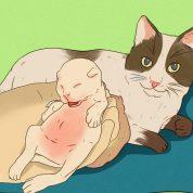 چگونه از یک بچه گربه مراقبت کنیم؟