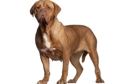 چگونه حیوانات (سگ) را تسکین دهیم؟