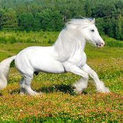 چگونه یک اسب را نوازش کنیم؟