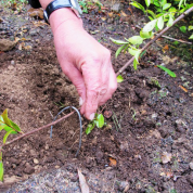 چگونه گیاه را با روش های غیرجنسی تکثیر کنیم؟