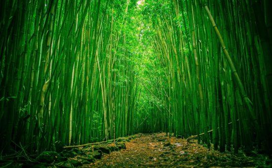 چگونه با کارکرد ساقه در گیاهان آشنا شویم؟