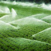 چگونه آب مورد نیاز گیاه در خاک حرکت می کند؟